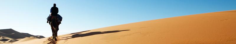 Maroko púšť, miestny na ťave