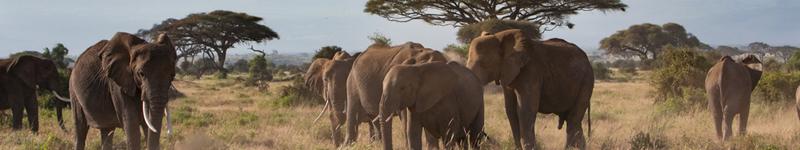 Tanzánia, slony, Kilimanjaro