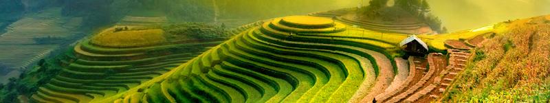 Vietnam, ryžové pole