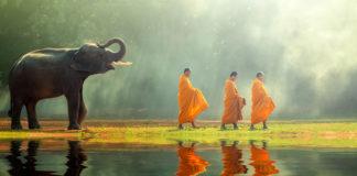 Thajsko mnísi a slon