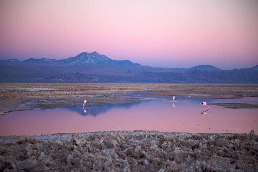 Salar de Atacama čile