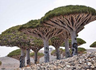 Ostrov Socotra Jemen