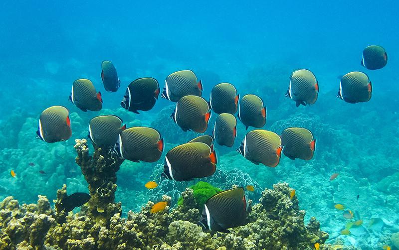 farebné rybyčky na ostrove v Thajsku
