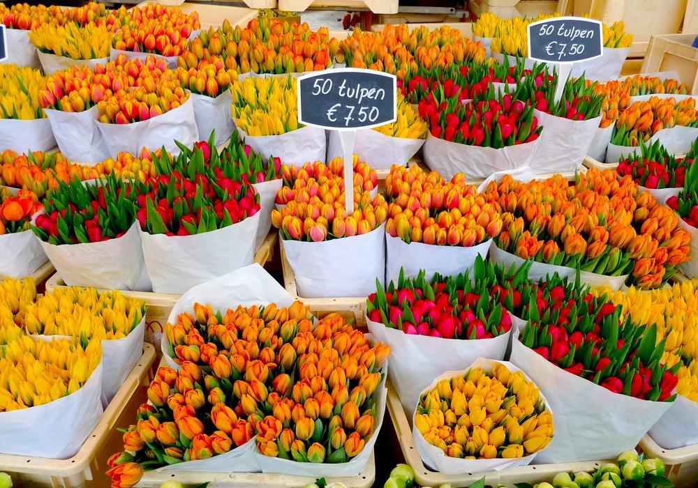 tulipány amsterdam
