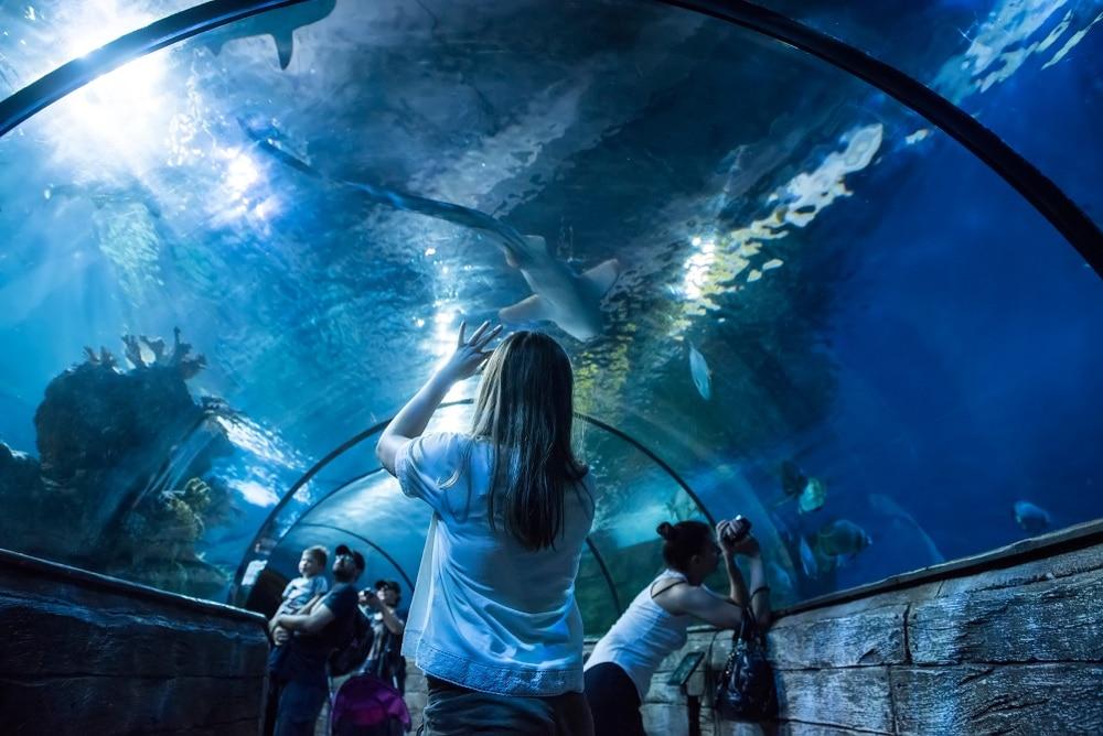 akvárium bugibba malta