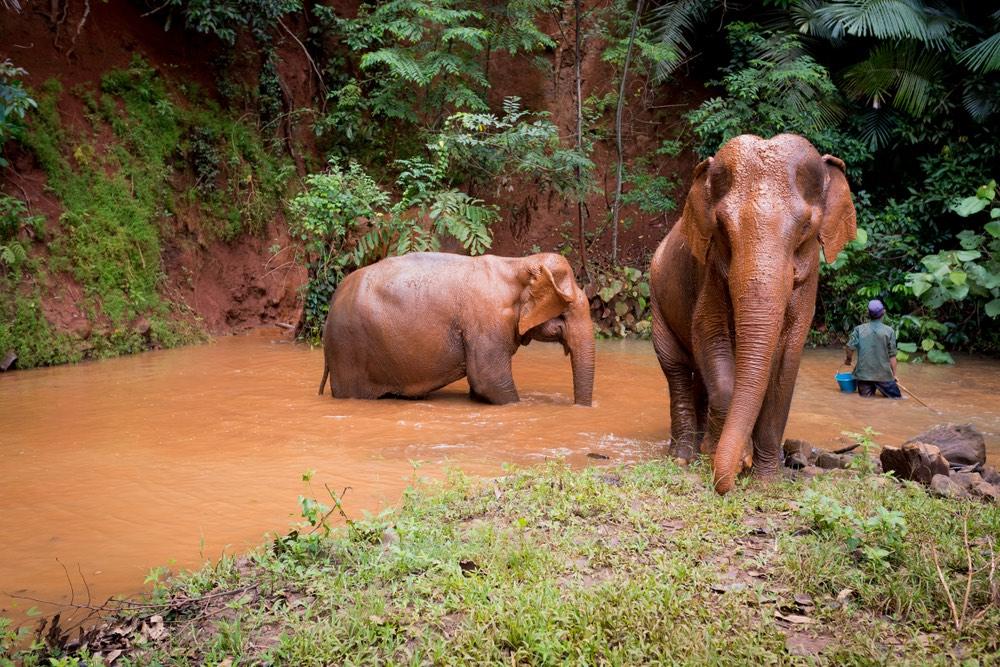 Elephant Valley Project, Kambodža