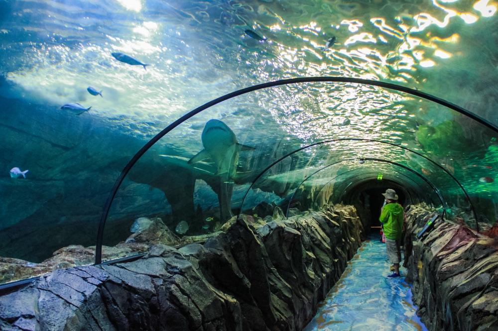 Akvárium Sea Life sydney