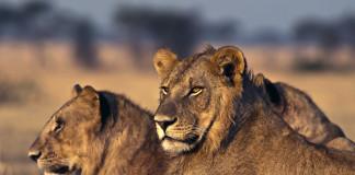 Levy v Afrike