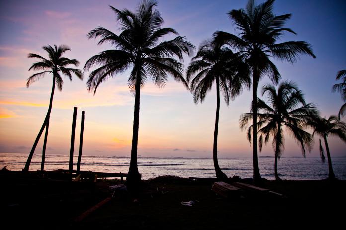 Palmy v Paname