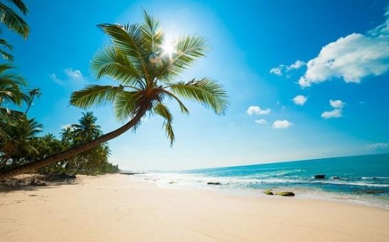Palma na pláži v Karibiku