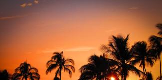 havaj západ slnka palmy