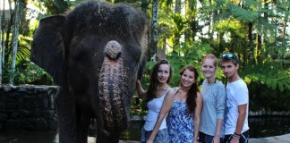 slon v Indonézii
