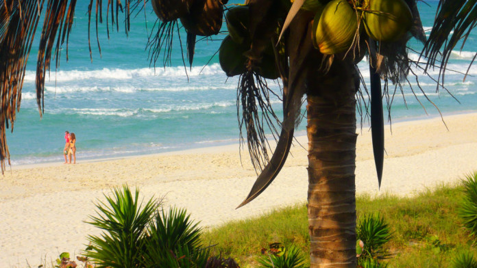 palma a pláž na Kube