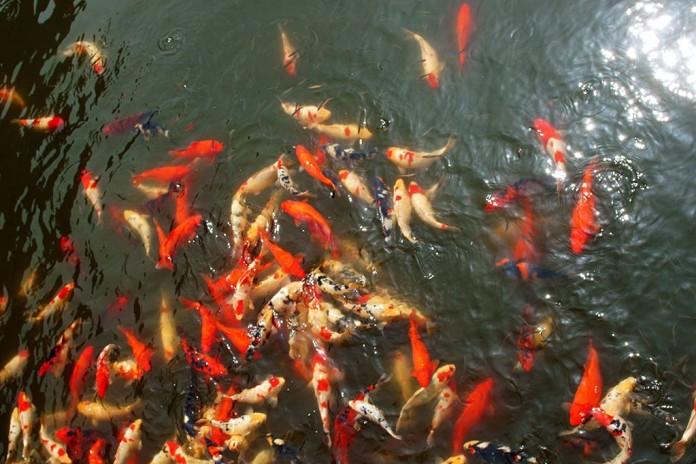 ryby v Číne