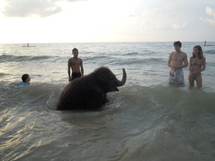 slon na pláži v thajsku