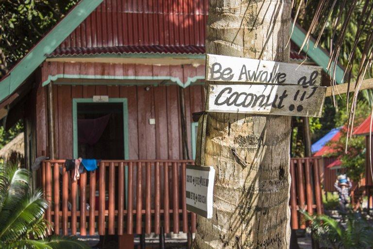 pozor kokosy kambodža
