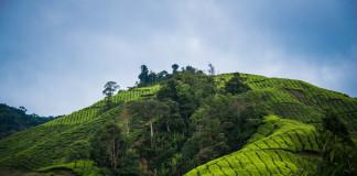 polia v Malajzii