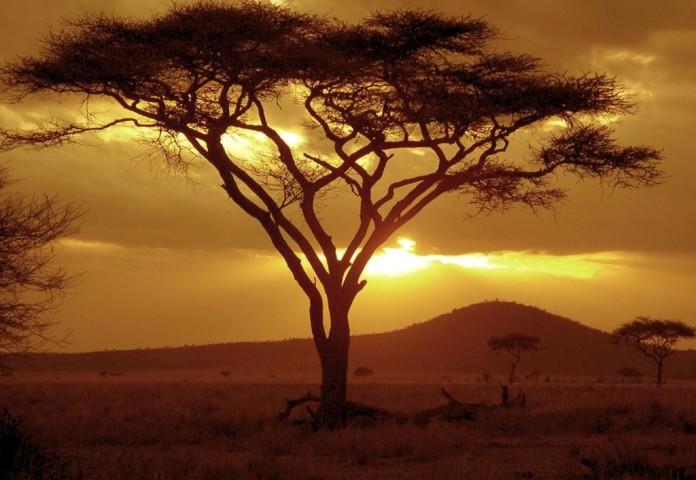 Tanzánia - Akácia, savana, západ slnka