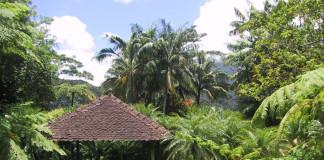 altánok v jungli na Martiniku