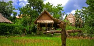 Phuket - ryža, domček, strašiak