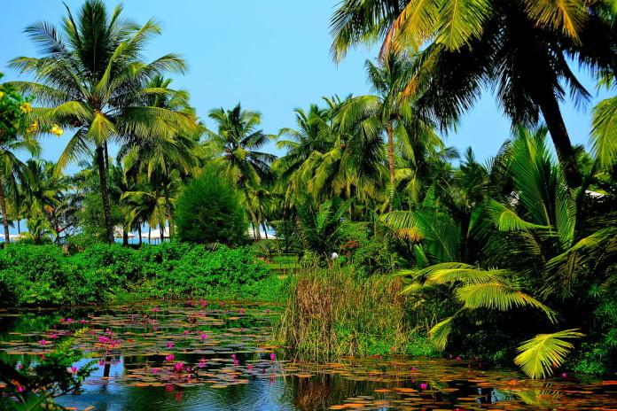 India - jazierko, palmy