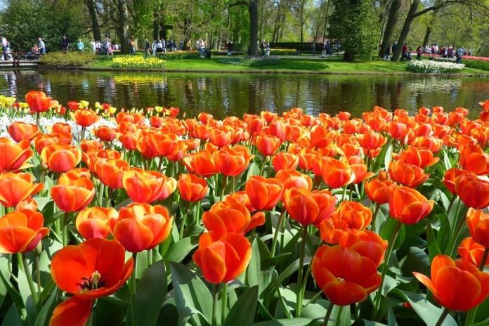 Holandsko - kvety, jazero, park