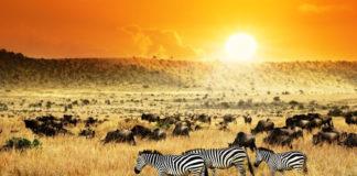 Keňa, savana