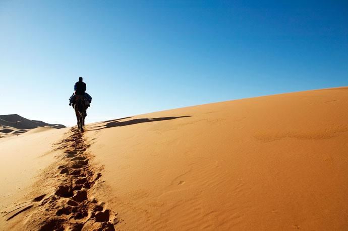 Maroko, ťava, púšť
