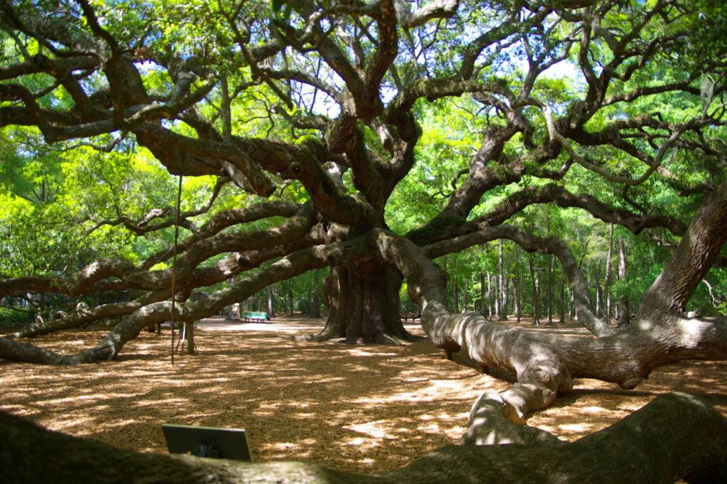 strom s konármi