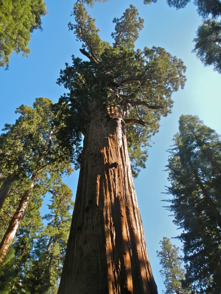 vysoký strom