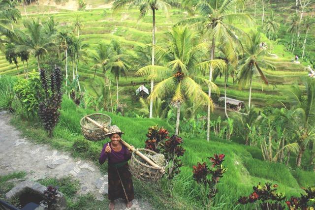 Tegalalang ryžové terasy Bali