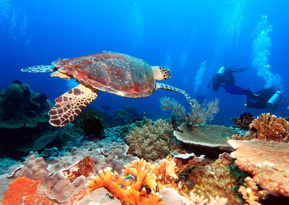 Podmorský svet v Indonézii