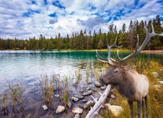 príroda v Kanade