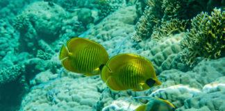 Podmorský svet v Hurghade