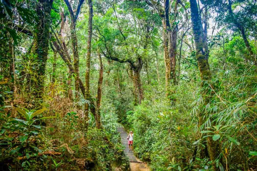 V dažďovom pralese na Borneu