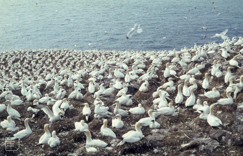 obrovské biele vtáky Gay Sex na vlak