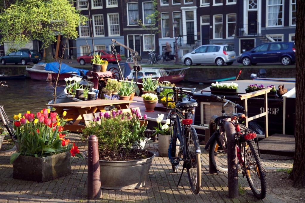 ulica, tulipány