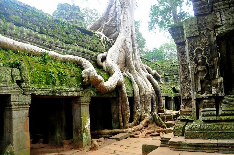 chrám strom