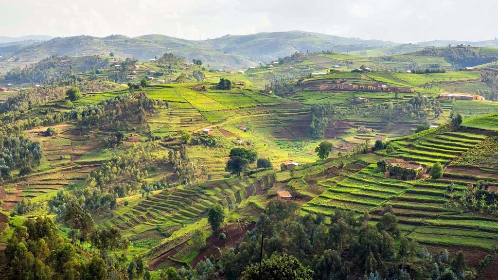 Plantáže v Rwande