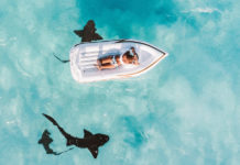 žraloky pri Great Exuma, Bahamy