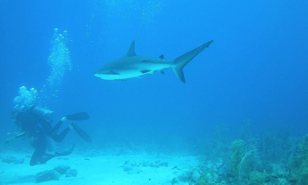 potápanie na Bahamách