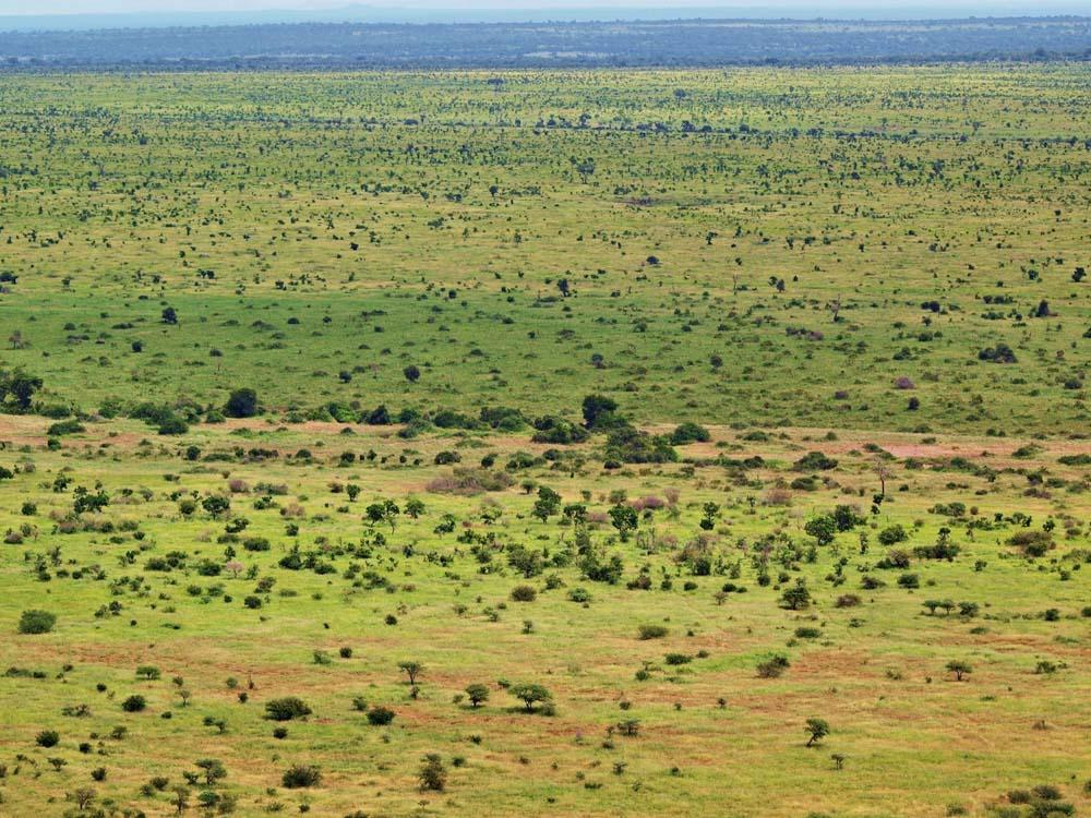 Krugerov narodny park