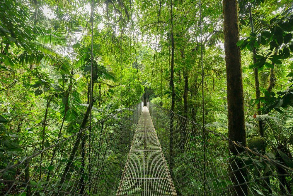 prales monteverde
