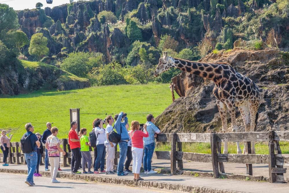 Žirafa za plotom pózuje pred kamerami v prírodnom parku Cabarceno